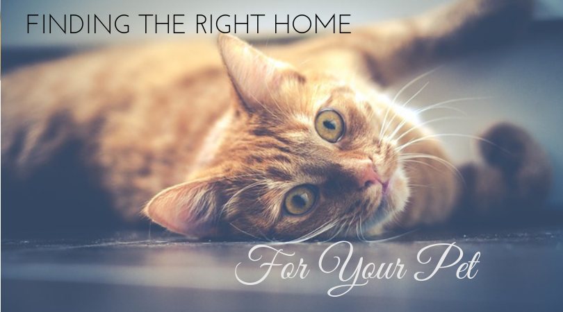 4 Great Tips for Finding a Home For You and Your Pet